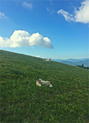-- scene on nearby mountain, 20 minute walk from house (dogs not included!)
