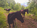 -- friendly horses on accessible private hiking trail next to property